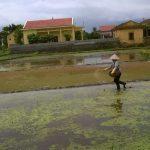 Xử lý rơm rạ tại đồng ruộng bằng chế phẩm vi sinh AT-YTB tại xã Hoàng Quế huyện Đông Triều tỉnh Quảng Ninh