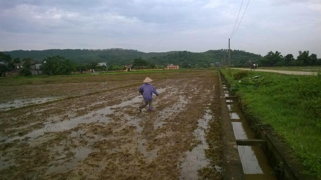Sử dụng chế phẩm vi sinh AT-YTB trên đồng ruộng xã Nguyễn Huệ, Đông Triều, Quảng Ninh