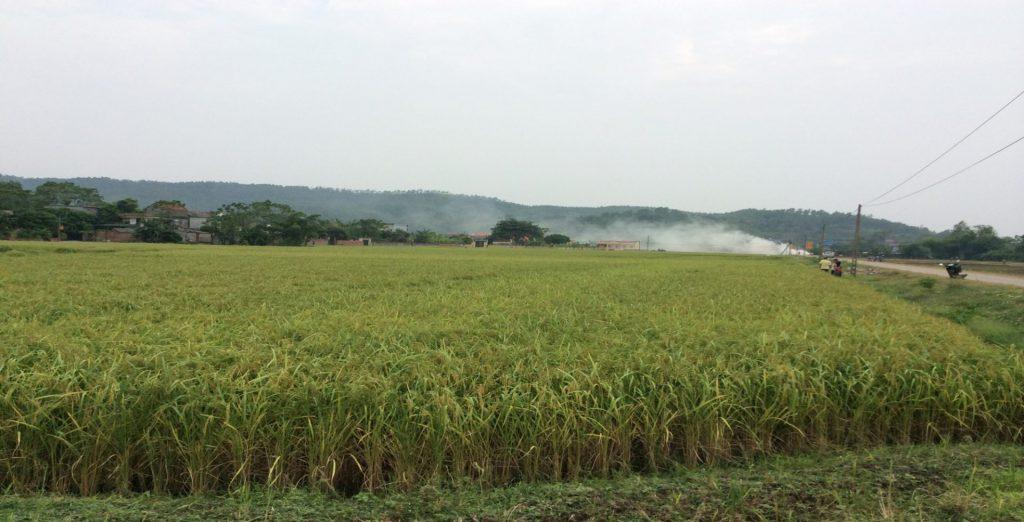 Xử lý rơm rạ tại đồng ruộng bằng chế phẩm vi sinh AT-YTB tại xã Nguyễn Huệ huyện Đông Triều tỉnh Quảng Ninh
