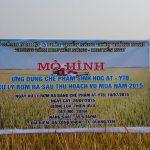 Ứng dụng chế phẩm vi sinh AT – YTB trên đồng ruộng tại  Xã Sông Khoai – Thị xã Quảng Yên – Quảng Ninh