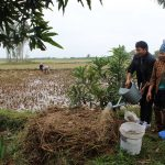 Xử lý rơm rạ bằng phương pháp ủ tại xã Lập Lễ, huyện Thuỷ Nguyên, TP Hải Phòng