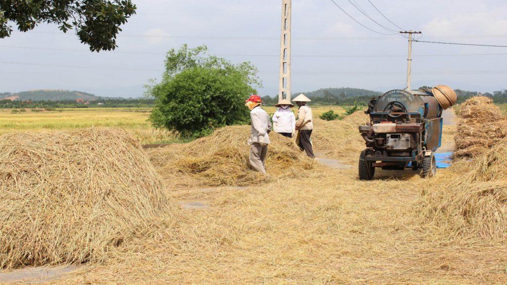 Quản lý rơm rạ sau mỗi vụ thu hoạch lúa và cân bằng dinh dưỡng trong đất trồng lúa