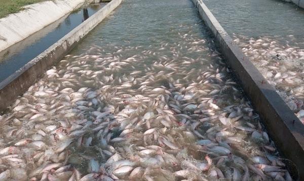 thủy sản