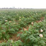 Cải tạo, bồi dưỡng đất nông nghiệp bằng vi sinh AT-YTB và phân bón hữu cơ