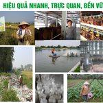 Quy trình trồng trọt, chăn nuôi hữu cơ không dùng kháng sinh, hóa chất của Cty TMH được khách hàng tin dùng