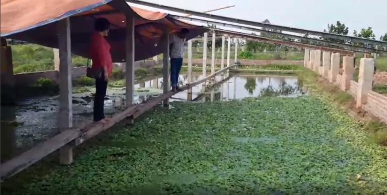 Cán bộ công ty môi trường TMH đến thăm ao nuôi ốc của anh Huân ở Thái Thụy, Thái Bình