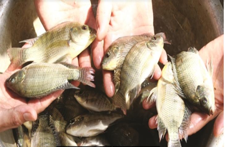 Kiểm tra tốc độ sinh trưởng của cá
