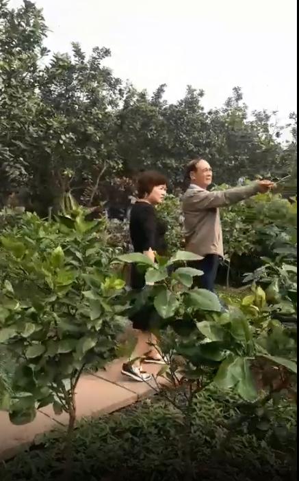 Giám đốc Công ty TMH tham quan vườn bưởi của hộ dân Xã Kim Xuyên, làng Bãi Mạc Thượng Quận, Kinh Môn, Hải Dương