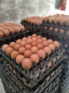 Niềm vui của các trang trại chăn nuôi gà đã ứng dụng chế phẩm sinh học AT-YTB